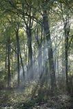 Amelisweerd automnal de forêt près de la ville néerlandaise d'Utrecht Photo libre de droits