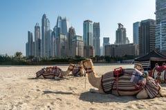 Amels del ¡de Ð en el fondo de los rascacielos del puerto deportivo de Dubai fotos de archivo libres de regalías