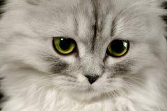 Amende de chat de nom Photographie stock libre de droits