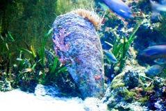 Amende de mer Photo stock