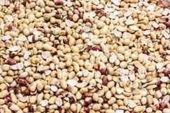 Amendoim Foto de Stock Royalty Free
