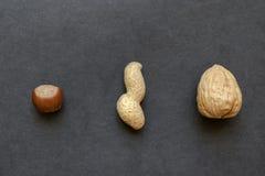 Amendoim, avelã e noz com as cascas de noz colocadas na superfície preta do fundo fotografia de stock royalty free