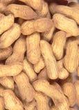 Amendoim da casca foto de stock royalty free