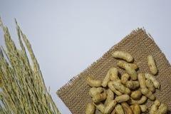 Amendoim dos feijões Fotos de Stock