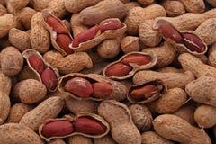 Amendoim ou amendoim Fotos de Stock Royalty Free