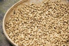 Amendoim que estão sendo secados Foto de Stock