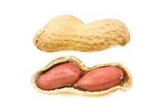 Amendoim real Imagens de Stock