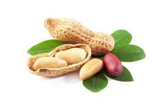 Amendoins fotografia de stock royalty free