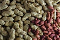 Amendoins crus em seus shell 1 Fotografia de Stock
