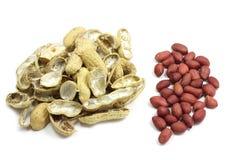 Amendoins descascados Imagem de Stock