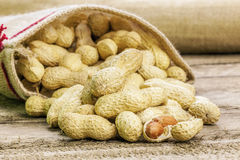 Amendoins descascados no saco da tela da juta Imagem de Stock