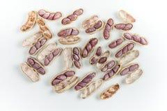 Amendoins fervidos Imagens de Stock