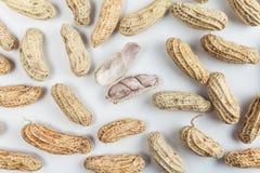 Amendoins fervidos Fotos de Stock Royalty Free