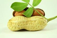Amendoins inteiros e descascados com close up das folhas Imagem de Stock