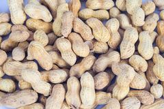 Amendoins nos escudos no branco imagens de stock royalty free