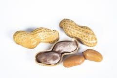 Amendoins nos escudos no branco imagem de stock royalty free