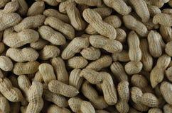 Amendoins nos shell crus Imagens de Stock