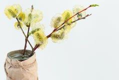 Amento el la primavera Imagen de archivo libre de regalías