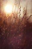 Amentos en sol de la mañana Fotografía de archivo libre de regalías