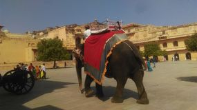 Amer Fort Images stock