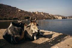 Amer fort i Jaipur, Indien Arkivfoton