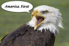 AmericaÂ的第一只老鹰 库存图片