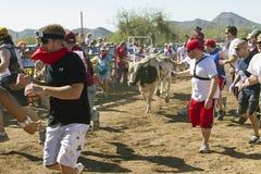 america Arizona byków target2351_1_ Zdjęcie Stock