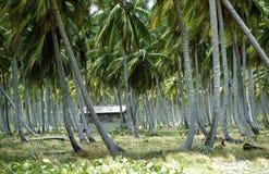 AMERICA CARIBBIAN SEA DOMINICAN REPUBLIC Stock Image