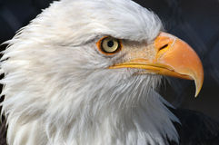 America's Bird Stock Images