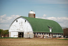 America's Heartland. Old barn with livestock in late spring Stock Photography