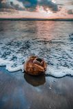 Sunset on the beach of the Caribbean shores stock photo