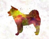 American Akita in watercolor Stock Image