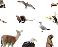 American animals. Ten animals from America on a white background, including a raccoon, two garter snakes, a white tailed deer, an otter, two seagulls, a bald Stock Image