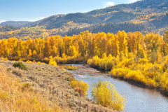 American Aspen Trees and Stream Stock Photos