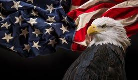 american bald eagle flag Στοκ φωτογραφία με δικαίωμα ελεύθερης χρήσης