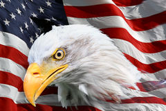 American bald eagle flag. Beautiful close up portrait of an American bald Eagle Haliaeetus leucocephalus with an American flag royalty free illustration