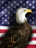 Bald Eagle with Flag. The national bird of the United States Of America, the majestic bald eagle against a Flag background. Great patriotic image and american Royalty Free Stock Image