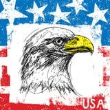 American Bald Eagle and Flag Stock Photos