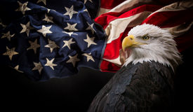 American Bald Eagle with Flag. American Bald Eagle - symbol of america -with flag. United States of America patriotic symbols Royalty Free Stock Photos