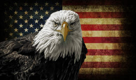 American Bald Eagle on Grunge Flag. Oil painting of a majestic Bald Eagle against a photo of a battle distressed American Flag
