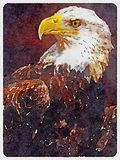 American Bald Eagle Illustration stock images