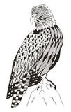American bald eagle sitting on a rock, zentangle stylized, vecto Stock Images