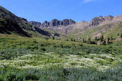 American Basin. Beautiful American Basin in Colorado is full of wildflowers in the summer Royalty Free Stock Images