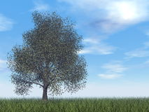 American beech tree - 3D render. American beech tree by day - 3D render stock illustration