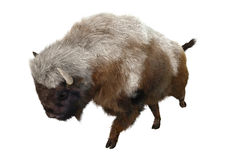 American Bison. 3D digital render of an American bison isolated on white background Royalty Free Stock Photos