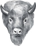 American Bison Head Watercolor Royalty Free Stock Photo