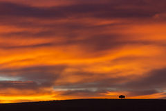 American bison silhouetted at sunrise Royalty Free Stock Photography