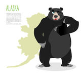 American black bear baribal and Alaska. Grizzlies showing thumbs Royalty Free Stock Photography