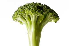 American broccoli Royalty Free Stock Photos