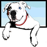 American bulldog Royalty Free Stock Images